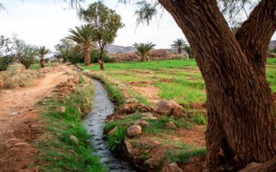 « L' initiative sur l'oasis durables » vue par une jeune fille volontaire